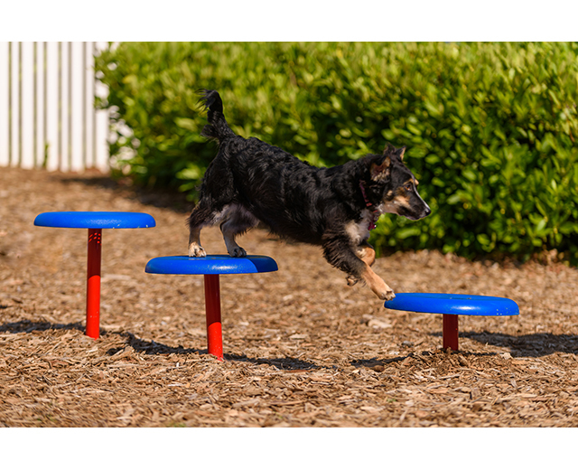 Stepping Paws Lifestyle Image, dog jumping