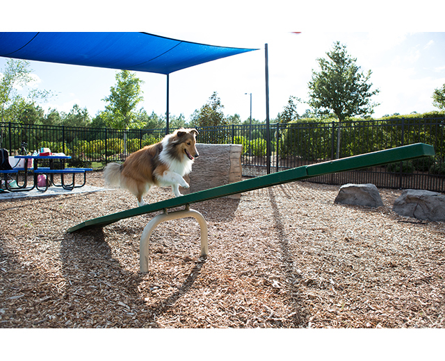 Teeter Totter Lifestyle Image with dog