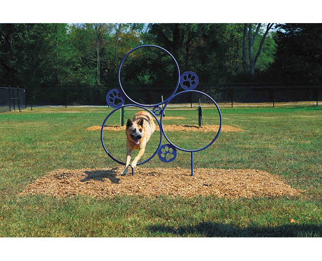 dog jumping through hoop jump