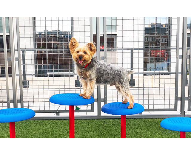 Stepping Paws Lifestyle Image Dog Standing