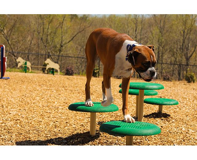 Stepping Paws Image Dog walking