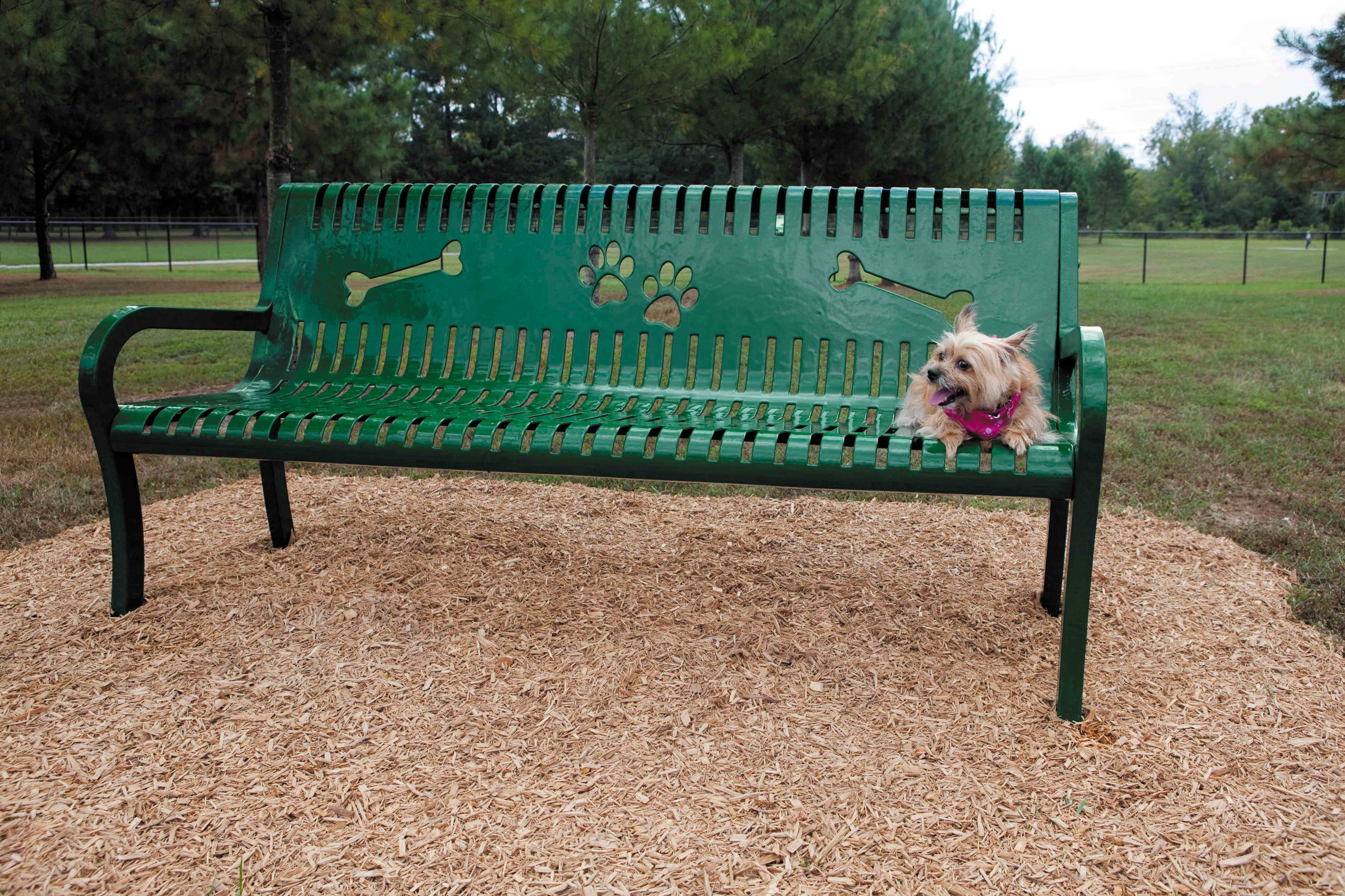 Small dog sitting on green Pooch Perch Bench