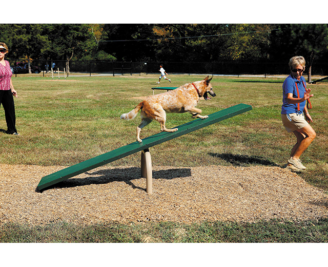 Teeter Totter Lifestyle Image with dog and owner
