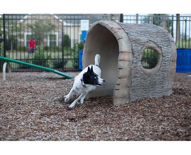 Log Tunnel Lifestyle Image, dog running through