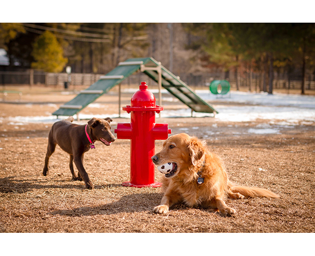 Dogs sitting by Fire Hydrant Image