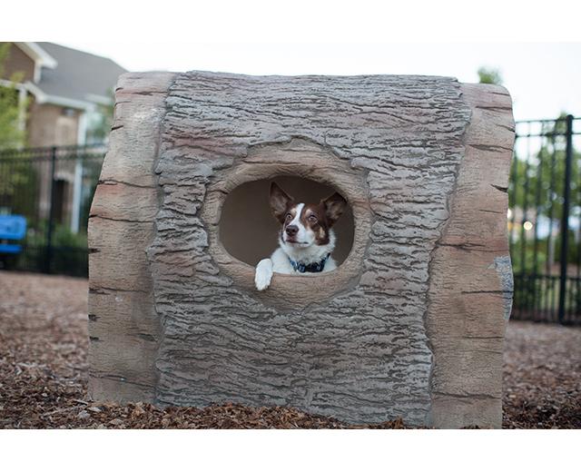 Log Tunnel Lifestyle Image, dog peaking out spy hole