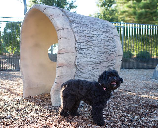 Log Tunnel Lifestyle Image